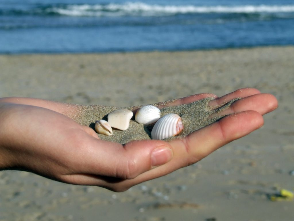 stop collecting shells